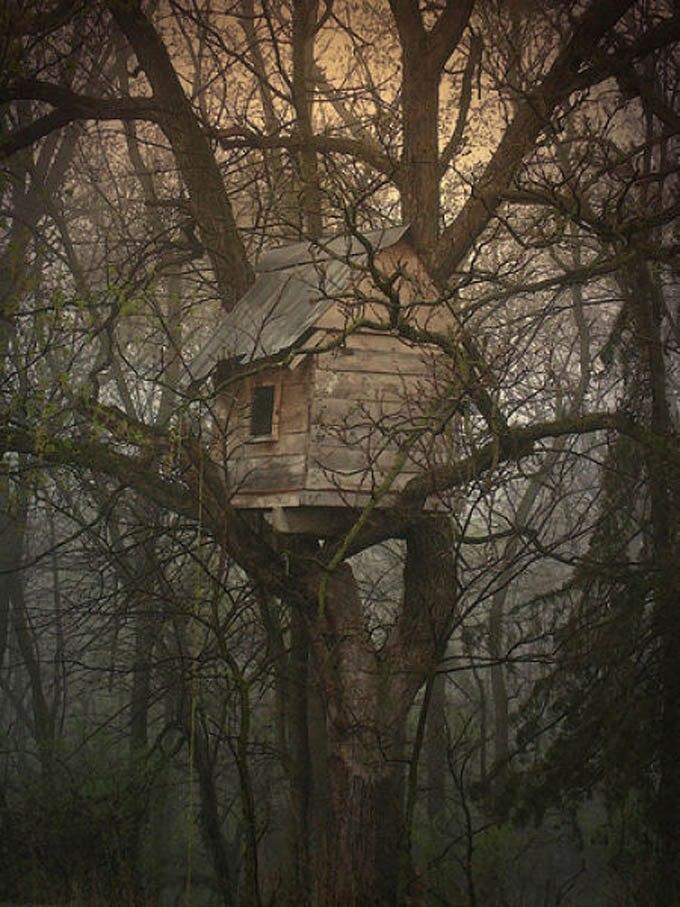 Фотографии старинных домов на деревьях